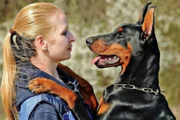 Are Dobermans Good Guard Dogs