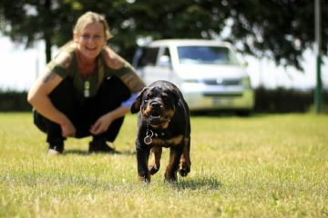 Do Rottweilers Bond with One Person
